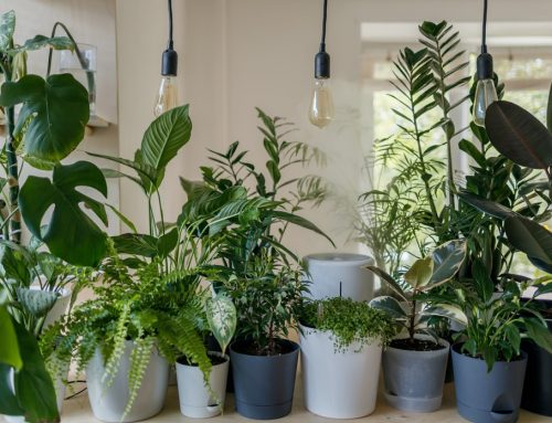 How to Care for Indoor Plants during Winter Months